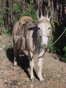 burrinho-donkey-591757-m